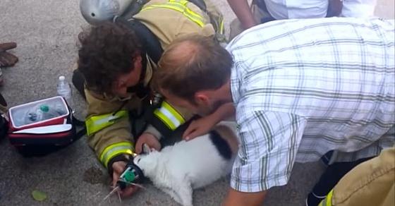 Хит Youtube: американские пожарные спасают кошку