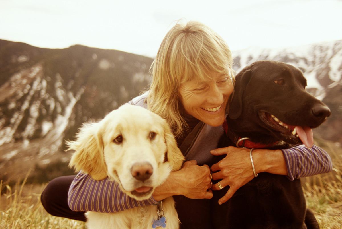 обворожительная выбор собак с картинками нее начинаются