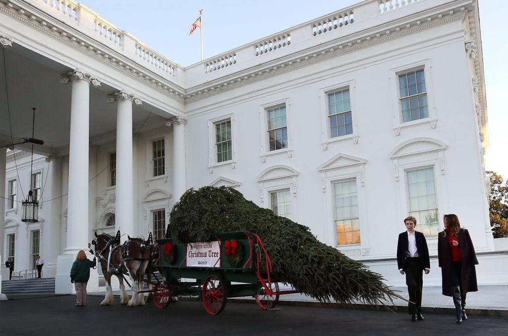 Мелания Трамп принимает рождественскую елку вБелом доме